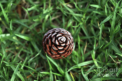 Baby Pine Cone Art Print by Stephen Mitchell