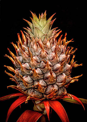 Photograph - Baby Pineapple by Heather Applegate