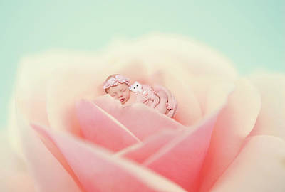 Photograph - Baby Pink by Lilia D