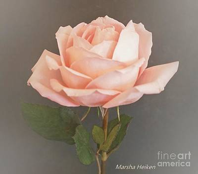 Photograph - Baby Pink Rose On Gray by Marsha Heiken