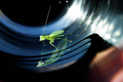 Photograph - Baby Praying Mantis by Miroslava Jurcik