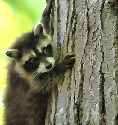 Smiling Mixed Media - Baby Raccoon In A Tree by Dan Sproul