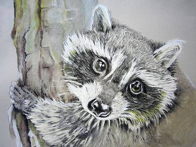 Drawing - Baby Raccoon by Teresa Smith