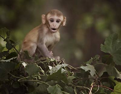 Photograph - Baby Rhesus 1 by Sheri McLeroy