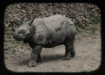 Photograph - Baby Rhinoceros by Jim Poulos