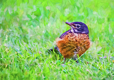 Royalty-Free and Rights-Managed Images - Baby Robin - Fresh From the Nest 3 - Paint by Steve Harrington
