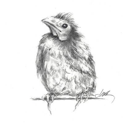Drawing - Baby Carinal - New Beginnings by Jacki Kellum