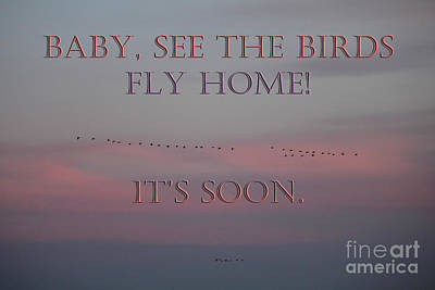 Photograph - Baby See The Birds by Donna L Munro