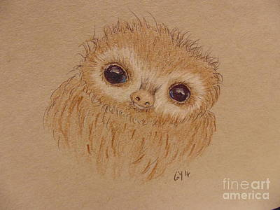 Drawing - Baby Sloth by Ginny Youngblood