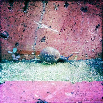 Photograph - Baby Snail Steps 2 by Betse Ellis