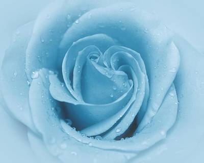 Photograph - Baby Soft - Blue by Angie Tirado