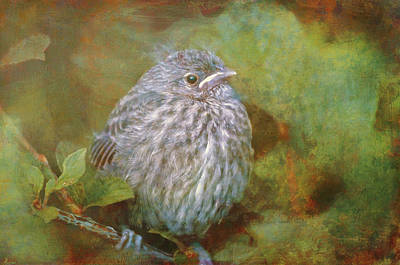 Photograph - Baby Sparrow - Digital Painting by Maria Angelica Maira
