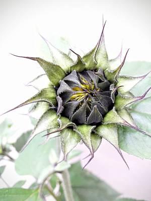 Photograph - Baby Sunflower by Mr Photojimsf