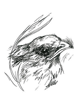 Drawing - Baby Swift In The Grass by MM Anderson