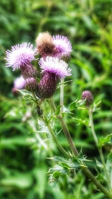 Photograph - Baby Thistles by YoursByShores Isabella Shores