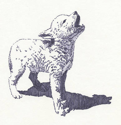 Drawing - Baby Wolf by John D Benson