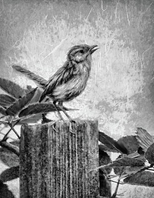 Mixed Media - Baby Wren In Black And White by Bonnie Willis