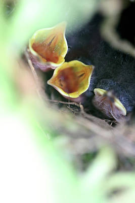 Photograph - Baby Wrens In The Flowers 338 by Ericamaxine Price