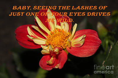 Photograph - Baby Your Lashes by Donna L Munro