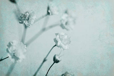 Photograph - Baby's Breath In Blue by Bernice Williams