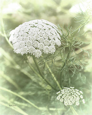 Photograph - Baby's Breath by Mike Braun