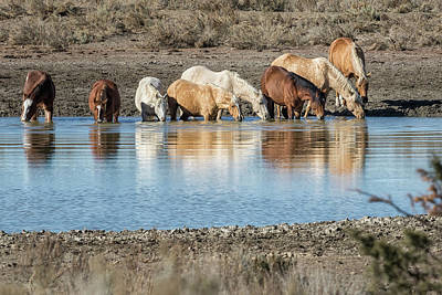 Photograph - Bachelor Band At The Waterhole by Belinda Greb