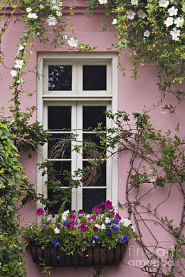 Camellia Photograph - Back Alley Window Box - D001793 by Daniel Dempster
