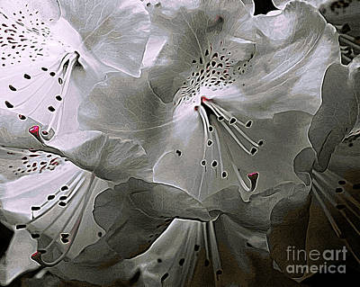 Photograph - Back Light Rhodie by Erica Hanel