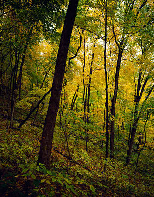 Wyalusing Photograph - Back Lit Autumn Color Trees Along Sugar by Panoramic Images