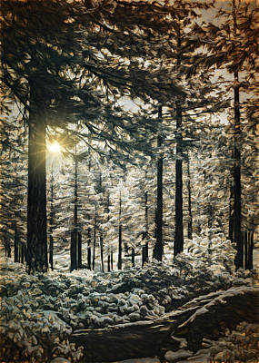 Photograph - Back Lit Forest by Maria Coulson