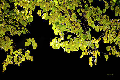 Photograph - Back-lit Leaves by Brian Wallace