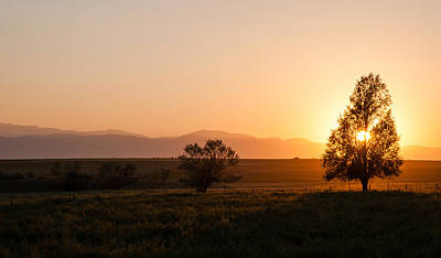 Photograph - Back Lit Tree At Sunset by Monte Stevens
