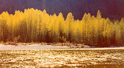 Back Lit Trees By The River Ae 2  Art Print by Lyle Crump