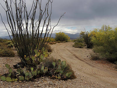 Back Road, Arizona Art Print