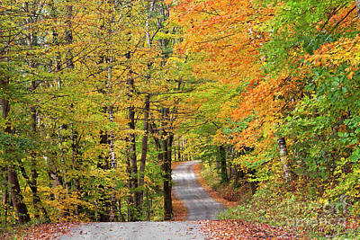 Photograph - Back Road Fall by Alan L Graham