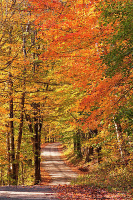 Photograph - Back Road Fall Foliage by Alan L Graham