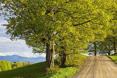 Photograph - Back Road Spring View by Alan L Graham