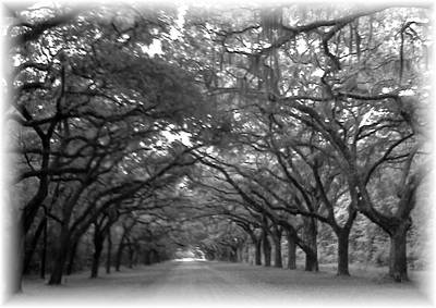 Photograph - Back Roads by Kim Zwick
