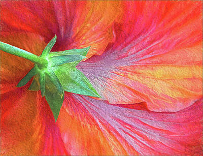 Photograph - Back View Of A Giant Hibiscus by Gerda Grice