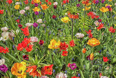 Background Of Colorful Flowers Art Print