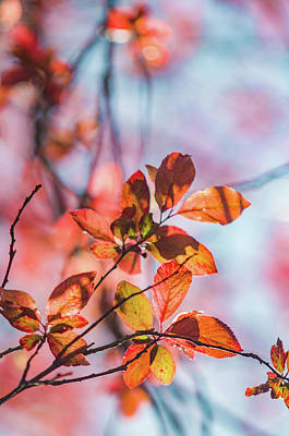 Photograph - Backlight Leafs by Carlos Caetano