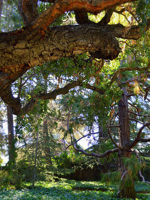 Photograph - Backlights And Twisted Trees by Glenn McCarthy Art and Photography