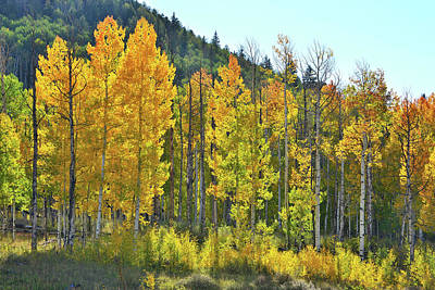 Photograph - Backlit Aspens Along Highway 62 by Ray Mathis