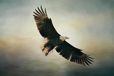 Photograph - Backlit Bald Eagle Art by Jai Johnson
