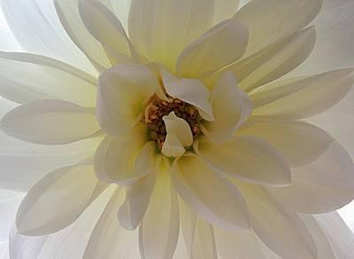 Photograph - Backlit Beauty by Regina Arnold