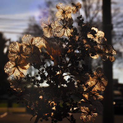 Photograph - Backlit Blossom by George Taylor