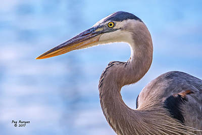 Photograph - Backlit Blue Heron by Peg Runyan
