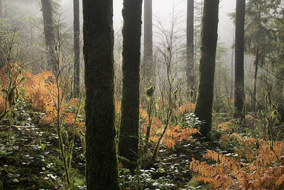 Photograph - Backlit Bracken Ferns by Adam Gibbs