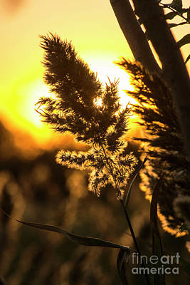 Photograph - Backlit By The Sunset by Zawhaus Photography