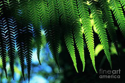Hapuu Photograph - Backlit Fern by Charmian Vistaunet